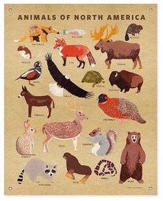 'Animals of North America' Banner - contemporary - prints and posters - The Land of Nod