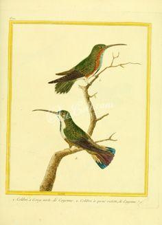046-Hummingbird      ...