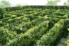 A-Mazing Vertical Garden | Da Nang City, Vietnam