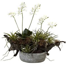 Shop for Orchid and Succulent Garden with Decorative Vase and more for everyday discount prices at Overstock.com - Your Online Home Decor Store!