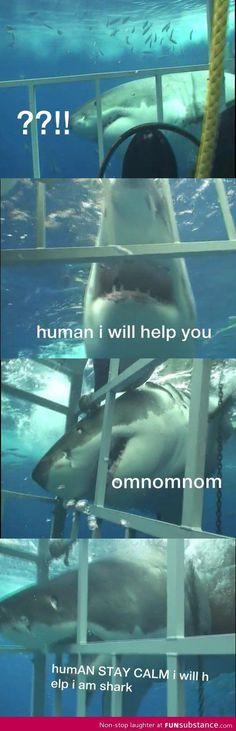 Sharks are just misunderstood creatures - FunSubstance.com on imgfave