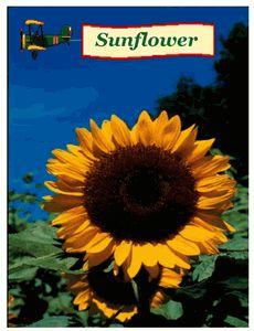 Sunflower seed packs - $0.50 each