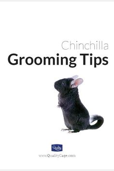 Looking for chinchilla grooming tips? Good grooming isn't just for your chinchilla's appearance. It also helps reduce the amount of fur that will be shed.