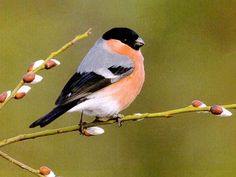 Beautiful Trees with Birds and Flowers | Colourful Birds HD Wallpapers