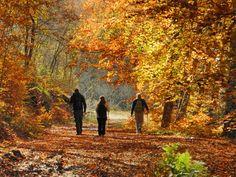 Forest of Lekani Kavala town Macedonia