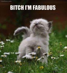 fabolous cat - do nothing for somebody/anybody/everybody and nobody