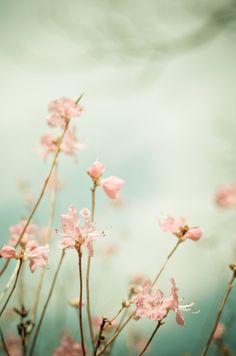 Gorgeous romantic fine art photography by @claire weston