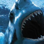 25 Crazy Facts About Sharks You Can Sink Your Teeth Into