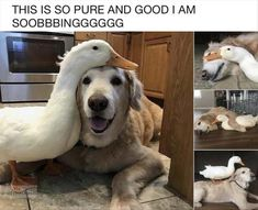 20+ Funny Animal Memes to Brighten Your Friday