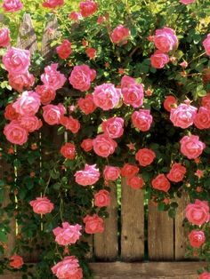 Cheap seeds lowes, Buy Quality seeds picture directly from China seed box Suppliers: Pink color climbing rose 300 Flower Seeds sementes de flores rose seeds For casa e jardim Garden Bonsai plants home decoration Beautiful Roses, Beautiful Gardens, Beautiful Flowers, Pretty Roses, Simply Beautiful, Beautiful Landscapes, Beautiful Pictures, Flowers Garden, Planting Flowers