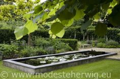 Eigen tuin  Overzicht met vijver  Tilia  overig
