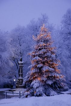 Ёлка. #Германия #Christmastree #Germany