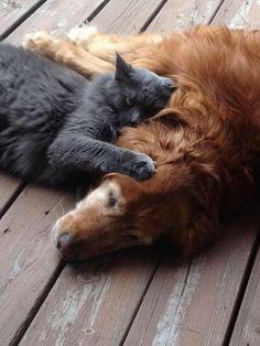 Hier nous vous proposions un chat et un oiseau amis et séparés par une vitre, aujourd'hui, ce sont un chien et un chat qui ne peuvent plus se quitter. A tel point qu'ils dorment ensemble, et c'est terriblement chou !