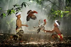 Cockfight by Ario Wibisono - Photo 4150167 / 500px