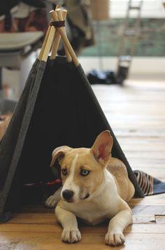 DIY Dog TeePee