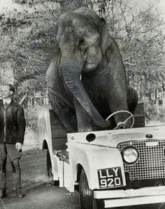 Land Rover's jumbo-sized reputation for strength and stamina has been put to some pretty severe tests for the last 25 years - including circus stunts by Chipperfield's driving elephant on March 11, 1973