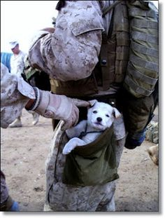 A small puppy wandered up to U.S. Marines from Alpha Company, 1st Battalion 6th Marines, in Marjah, Afghanistan on. After following the Marines numerous miles, a soft hearted Marine picked the puppy up and carried the puppy in his drop pouch.