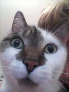 Keks Katze | Pawshake