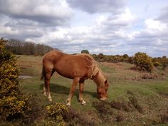 Wilveley Common The New Forest