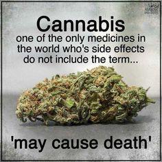 Weed Facts, Medical Benefits Of Cannabis, Medical Marijuana, Ganja, Ex Amor, Smoking Weed, Fibromyalgia, Health