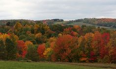 Autumn rolling hills in Wayland, NY