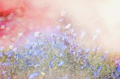 Blue Meadow by Captured by Karen, via Flickr