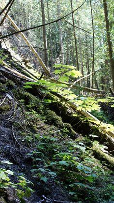 Margaret Falls, Salmon Arm, BC