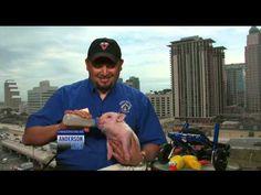 Meet the Inspiring Pig in a Wheelchair - YouTube