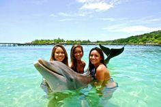 Have you swam with a dolphin?