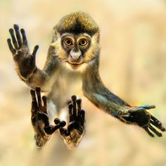 monkey on the glass
