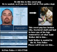 Todd Walker - animal abuser - If you know his whereabouts, call St. Petersburg, Florida police.  727-893-7780 - Let's put TODD WALKER away for good.  Get this sociopath off the streets.  Please re-pin!