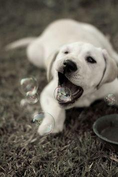 Bubbles - never quit to entertain.