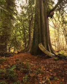 ✯ Old cedar on Black Creek :: By Jim Purscelley ✯