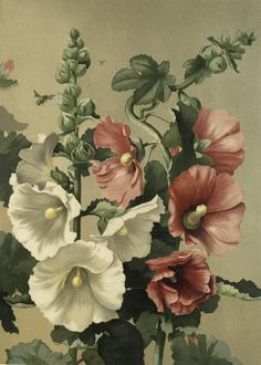 Public Domain Hollyhocks Image -Beautiful Floral! - The Graphics Fairy