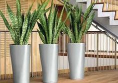 NewPro Containers offers the NEW Lechuza Diamante tall planter at wholesale pricing to the trades. NewPro is a direct supplier of outdoor and indoor Lechuza planters, plant containers, and flower pots. Sansevieria Plant, Sansevieria Trifasciata, Tall Planters, Planter Pots, Outdoor Plants, Potted Plants, Snake Plant Care, Mother In Law Tongue, Indoor Flower Pots