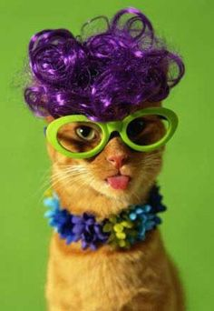 cats in wigs -