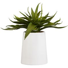 Shop Potted Faux Aloe Bring a soothing succulent to your environs. Matte white ceramic pots a lush, lifelike aloe vera plant. For expert tips on decorating with faux botanicals, head to . Succulent Pots, Planting Succulents, Planting Flowers, Plant Pots, Ceramic Flower Pots, Ceramic Pots, Pergola Pictures, Home Decor Mirrors, Faux Plants