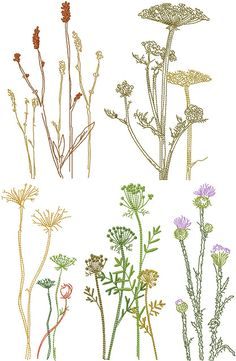 embroidered botanical line drawings - these designs by Anna Bove for machine embroidery, but can be inspiring for freehand drawn embroidery.