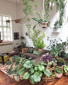 lovely plants in the living room