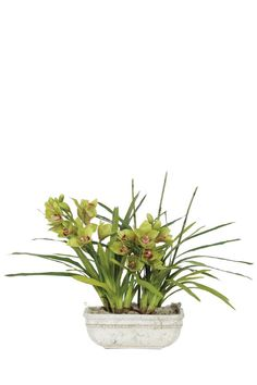 Beautiful Faux Orchid Flower Arrangement in Beige.  Free Shipping. Orchid Flower Arrangements, Neutral Tones, Faux Flowers, Fabric Online, Home Accessories, Orchids, Jr, Beige, Free Shipping