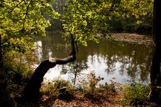 Am Pfaffenweiher, dem mittleren Weiher der Lengwiler Weiher (Foto: F. Rutschmann) Photos, Nature Reserve