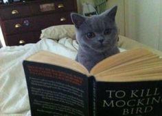 O gato leitor