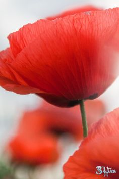 Remembrance Sunday! Remembering those who fought and fight to allow us to live the lives we want, safely!   30Fifteen | Fast Facts Friday | Poppy | Lifestyle | Blog