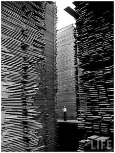 Alfred Eisenstaedt - A man standing in the lumberyard of Seattle Cedar Lumber Manufacturing. 1939