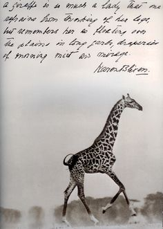 "Karen Blixen/Peter Beard - ""A giraffe is so much a lady that one refrains from thinking of her legs, but remembers her as floating over the plains in long garb, draperies of morning mist her mirage. Peter Beard, All About Africa, Out Of Africa, Kenya Africa, Damir Doma, African Animals, African Safari, Vincent Van Gogh, Moleskine"