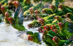 Burungnya Burungnyadotcom Di Pinterest 9 89rb Pengikut