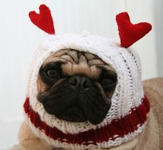 pug love <3