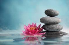 Piedras con flor zen 29 FRASES del zen para vivir de manera diferente