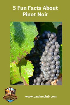 5 Fun Facts About Pinot Noir - The California Wine Club California Wine Club, Types Of Red Wine, Wine Facts, Barolo Wine, Wine And Food Festival, Pinot Noir Wine, Wine Education, Wine Sale, Red Wine Glasses