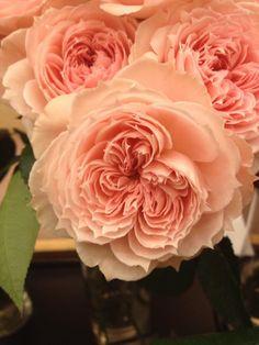 Japanese Hikaru Rose